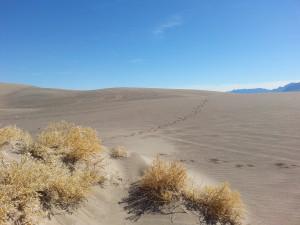 The beautiful dunes