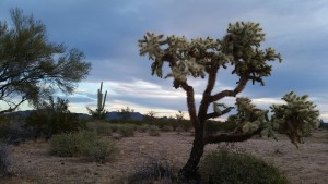 the beautiful Sonoran Desert at sunrise
