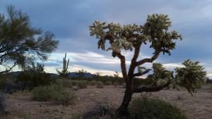 20150125 074240 300x169 Wanderhussy: Arizona Edition!