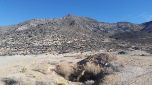 Unassuming Yucca Mountain