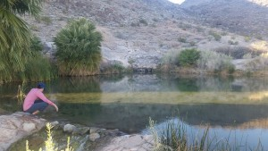 Rogers Spring, a warm pond (about 80 degrees) by Lake Mead