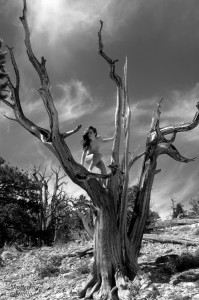01 Nude Tree 1 018 BW web 199x300 The Fabulous Ancient Bristlecone Pine Forest