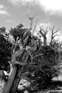 02 Nude Tree 2 106 BW web 199x300 The Fabulous Ancient Bristlecone Pine Forest