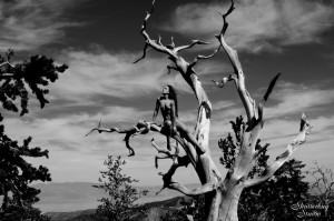 03 Nude Tree 3 298 BW web 300x199 The Fabulous Ancient Bristlecone Pine Forest