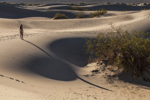 Mesquite Dunes at sunrise